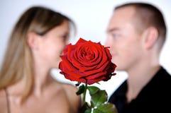 Amantes de Rosa Imagens de Stock
