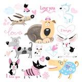 Amantes do cão ajustados Foto de Stock
