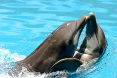 Amantes do golfinho Foto de Stock Royalty Free