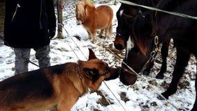 Amantes do tempo frio junto Fotografia de Stock Royalty Free