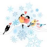 Amantes engraçados do pássaro Foto de Stock