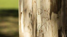 Amantes iniciales escritos en un tronco de árbol, tronco del eucalipto imagen de archivo libre de regalías