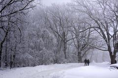 Amantes que recorren en las maderas hermosas del invierno Fotos de archivo libres de regalías