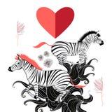 Amanti delle zebre Fotografia Stock Libera da Diritti