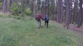 Amanti romantici della donna e del giovane che camminano attività ricreativa insieme d'esplorazione di viaggio della foresta nel  archivi video