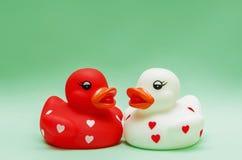 Amants de canards Photo stock