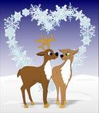 Amants de cerfs communs Image stock