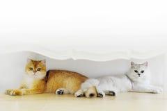 Amants de chat photo libre de droits