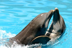 Amants de dauphin Photo libre de droits