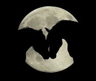 Amants de lune Photo stock