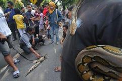 Amants de reptile en Indonésie Photographie stock libre de droits