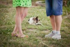 amants et un chien sur la promenade d'été Photos libres de droits