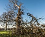 Łamany drzewo Zdjęcia Royalty Free