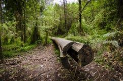 Łamany drzewo Zdjęcie Royalty Free