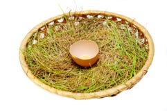 Łamany jajko na trawie Fotografia Royalty Free