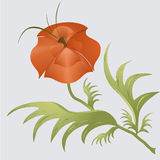 Amapola ilustración del vector