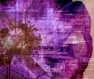 Amapola blanqueada Fotografía de archivo libre de regalías