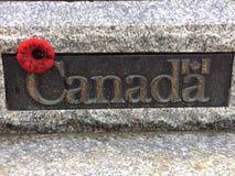 Amapola canadiense Foto de archivo libre de regalías