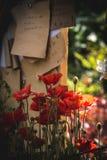 Amapola de maíz en la plena floración bajo tablero de la nota stock de ilustración