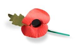 Amapola del rojo de la conmemoración Foto de archivo libre de regalías