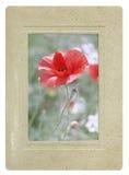 Amapola retra del rojo de la postal del estilo Imágenes de archivo libres de regalías