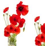 Amapola roja en un vidrio fotos de archivo libres de regalías