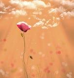 Amapola roja en verano libre illustration