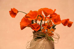 Amapolas anaranjadas Imágenes de archivo libres de regalías