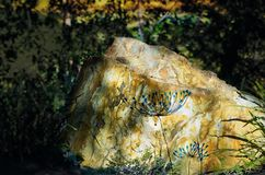 Amapolas azules dibujadas mano en roca resistida Fotografía de archivo libre de regalías
