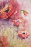 Amapolas con el fondo rosado y púrpura Imagenes de archivo