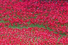 Amapolas de cerámica simbólicas rojas - torre de Londres Imagen de archivo