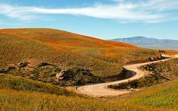 Amapolas de oro de California y flores sabias amarillas en el alto desierto de California meridional Fotos de archivo libres de regalías