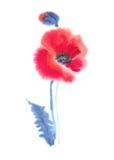 Amapolas del escarlata en un fondo blanco Imagen de archivo