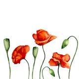 Amapolas del flor Imagen de archivo