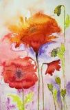 Amapolas en colores calientes Imagen de archivo