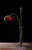 Amapolas en florero Imagen de archivo