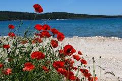 Amapolas en la playa Fotos de archivo libres de regalías