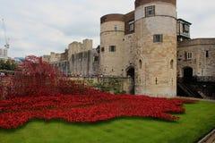 Amapolas en la torre de Londres fotografía de archivo libre de regalías