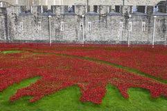 Amapolas en la torre de Londres Fotos de archivo