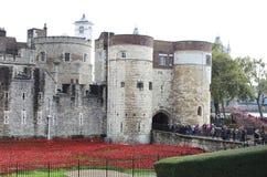 Amapolas en la torre de Londres Foto de archivo
