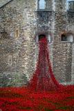 Amapolas en la torre de Londres Fotos de archivo libres de regalías