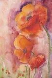 Amapolas en un fondo rosado Imagen de archivo libre de regalías