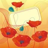Amapolas magníficas del rojo de la tarjeta Fotografía de archivo