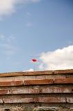 Amapolas rojas Fotos de archivo libres de regalías