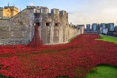 Amapolas rojas cerca de la torre de Londres imágenes de archivo libres de regalías