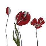 Amapolas rojas en una fila En el fondo blanco Imágenes de archivo libres de regalías