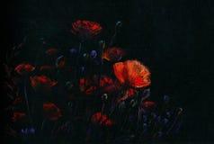Amapolas de la noche Foto de archivo