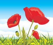 Amapolas rojas florecientes en un paisaje Foto de archivo