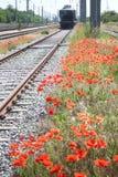 Amapolas rojas a lo largo de pistas de ferrocarril Imágenes de archivo libres de regalías