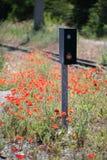 Amapolas rojas salvajes que florecen cerca de pistas de ferrocarril Imagen de archivo libre de regalías